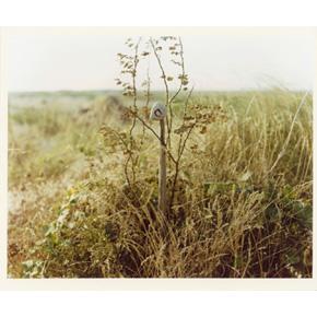 デレク・ジャーマンの画像 p1_6